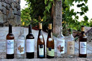 Read more about the article Vinhos de Lafões no Concurso de Vinhos de Portugal?